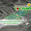 Top Plant najtańsze sadzonki